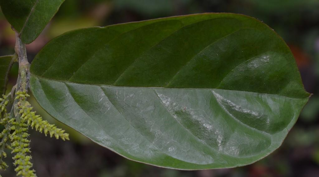 /wp-content/uploads/2020/10/1%20Euphorbiaceae%20%201.jpg