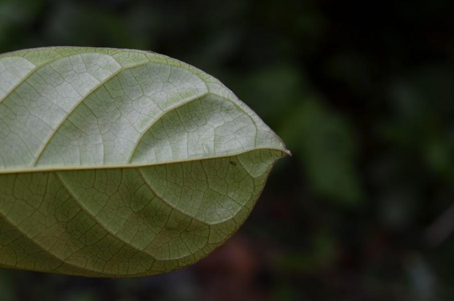 /wp-content/uploads/2020/10/1%20Euphorbiaceae%20%205.JPG