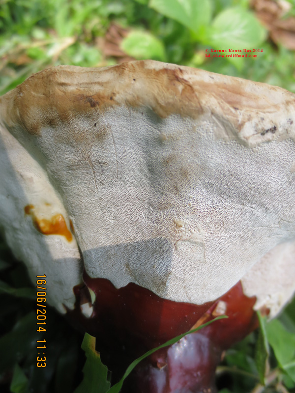 /wp-content/uploads/2020/10/10._Fungus_sp.__-_under_side__IMG_6558.jpg