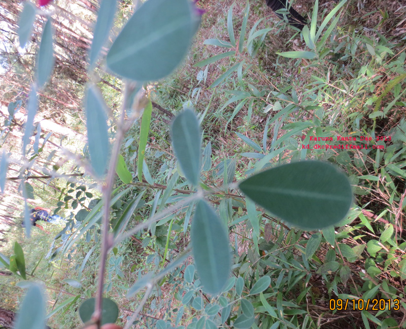 /wp-content/uploads/2020/10/2._Unknown_Fabaceae_-1__Leaf_IMG_3437.jpg