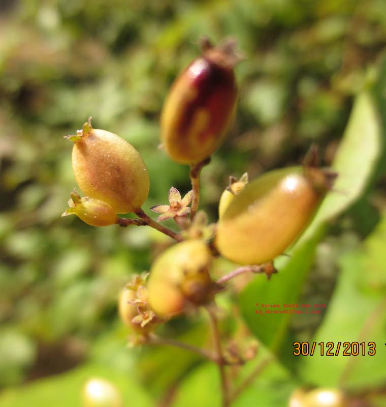 /wp-content/uploads/2020/10/5._Unknown_climber-_Fruit_IMG_5356.jpg