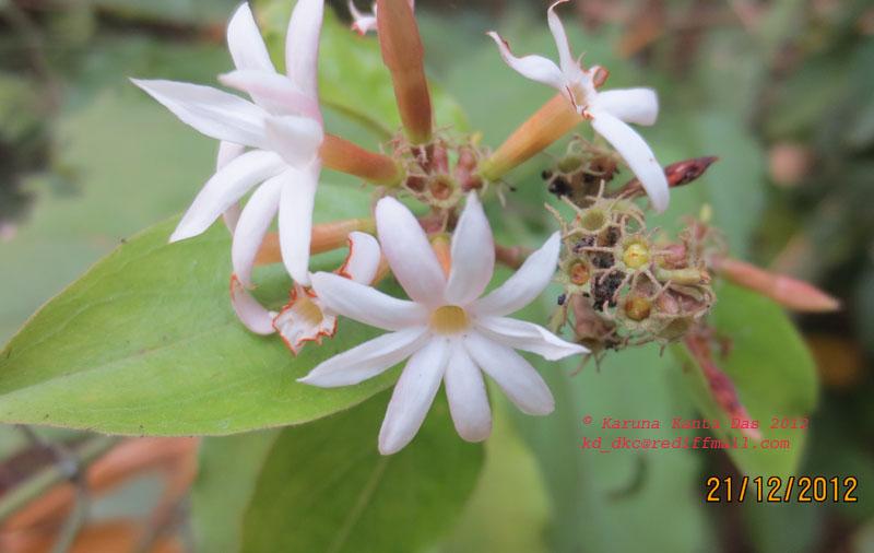 /wp-content/uploads/2020/10/8._Unknown_sp._-_Flower__IMG_1106-2.jpg