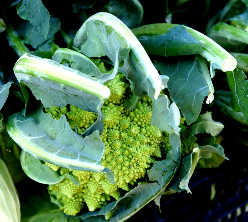 /wp-content/uploads/2020/10/Brassica-oleracea-Romanesco-Mountain%20view-DSC08106-California-2.jpg