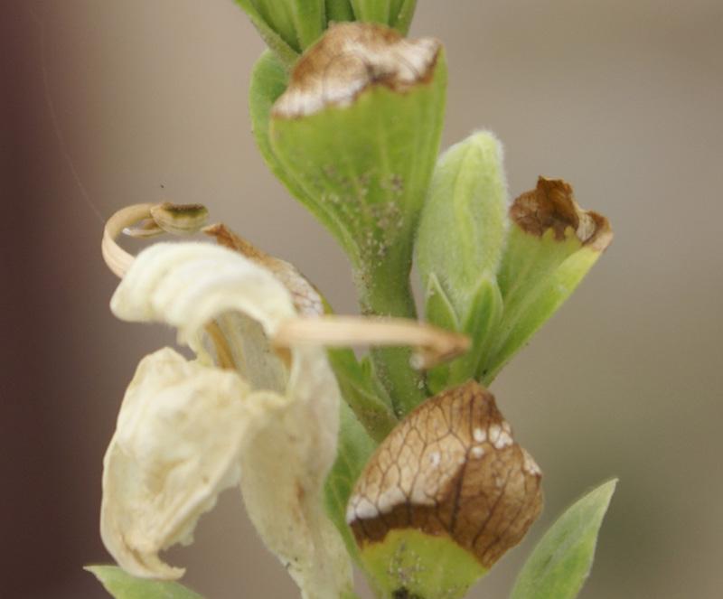 /wp-content/uploads/2020/10/Dubia-acanthaceae-Ek%20tal%20lake-Morni-10-4-DSC05634-Morni-3.jpg