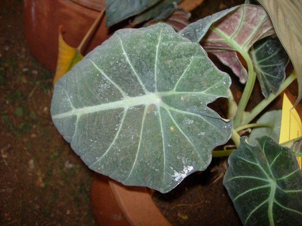 /wp-content/uploads/2020/10/Flower%20Show-Mumbai-DSCN2690-9.JPG