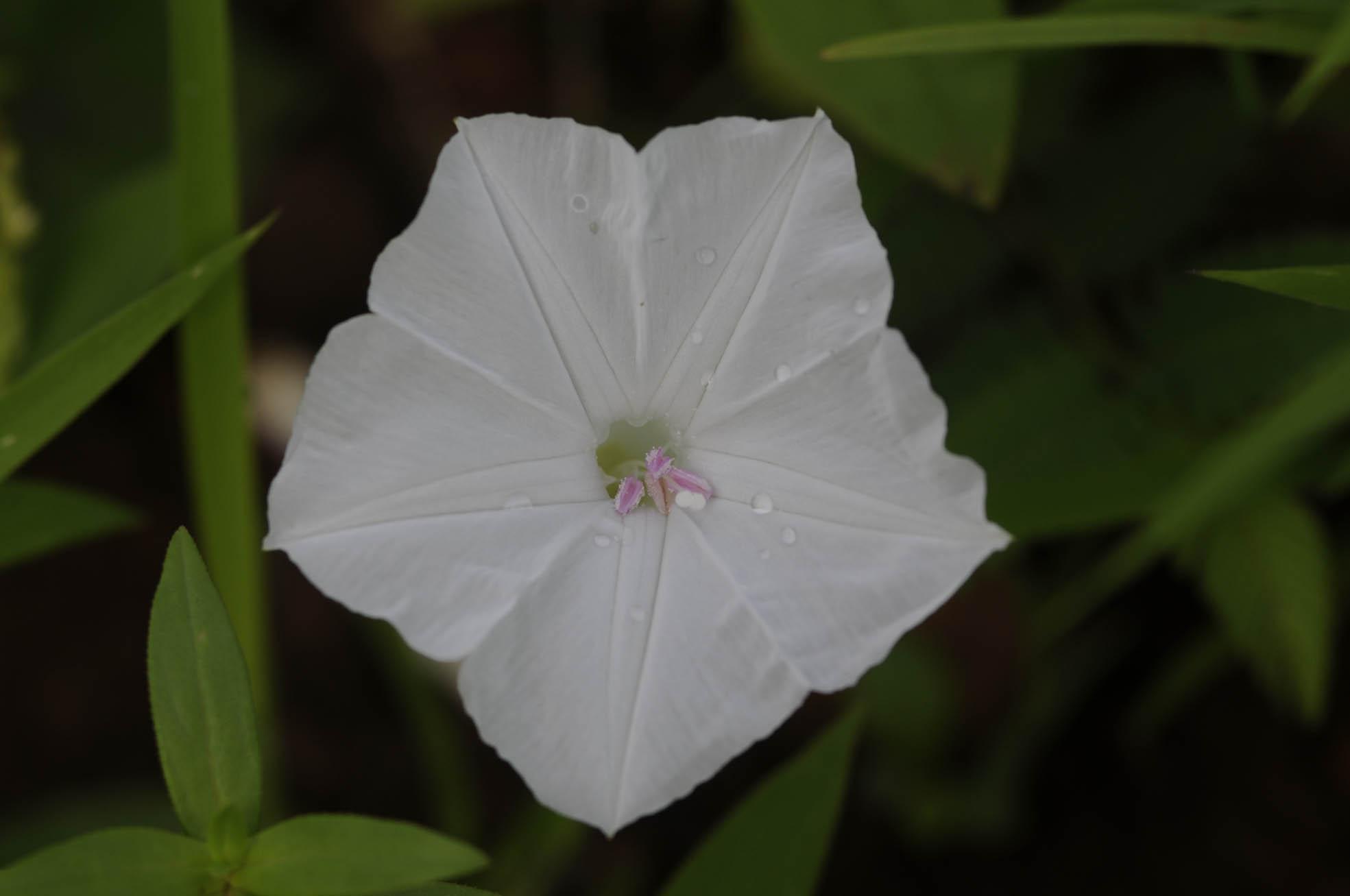 /wp-content/uploads/2020/10/Flower-Aarey-1.jpg