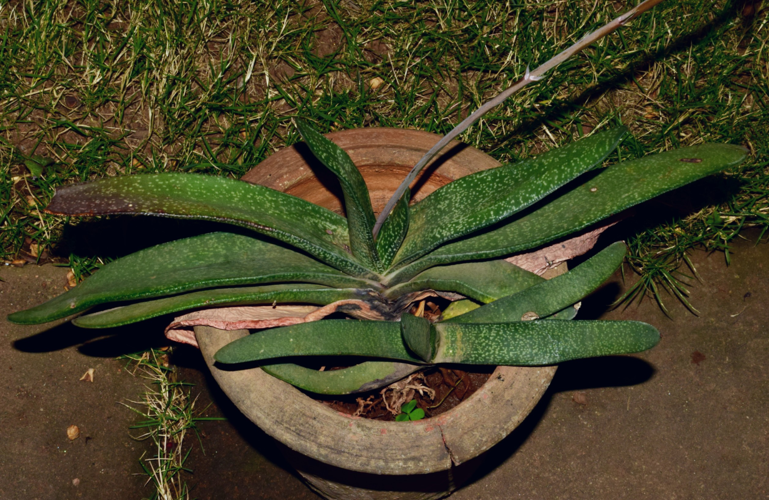 /wp-content/uploads/2020/10/Gasteria%20planted%20in%20pot.jpg