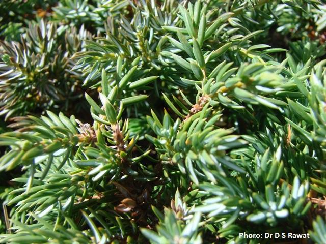 /wp-content/uploads/2020/10/Juniperus-II_UID_DSR_1.JPG