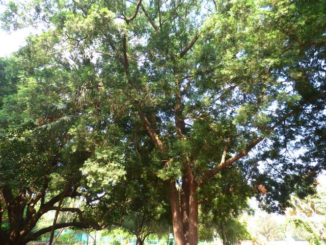 /wp-content/uploads/2020/10/Lalbagh-Bangalore-P1250696.JPG