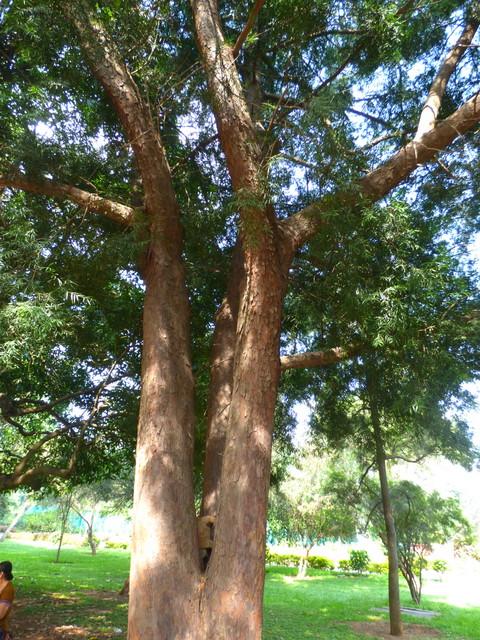 /wp-content/uploads/2020/10/Lalbagh-Bangalore-P1250697.JPG