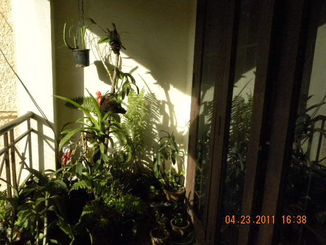 /wp-content/uploads/2020/10/My%20balcony-%20my%20Rain-forest.%20018.jpg