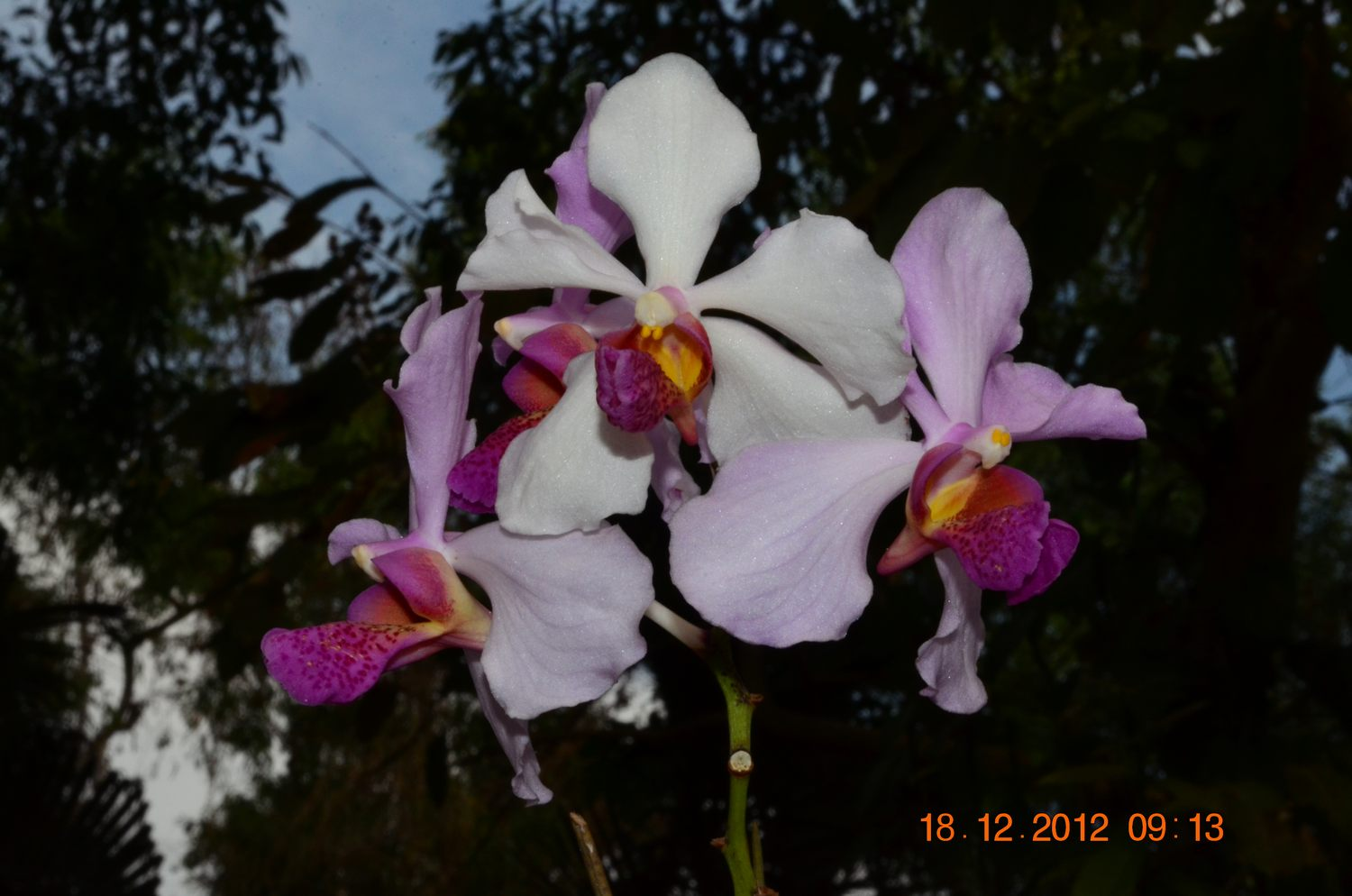 /wp-content/uploads/2020/10/Orchid%20CBG%20-1-.JPG