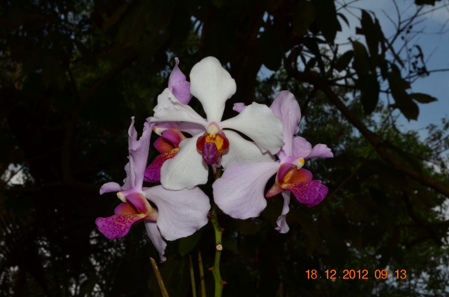/wp-content/uploads/2020/10/Orchid%20CBG%20-2-.JPG