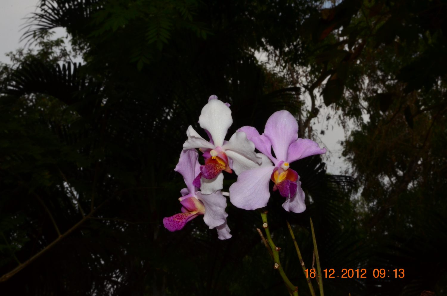 /wp-content/uploads/2020/10/Orchid%20CBG%20-5-.JPG