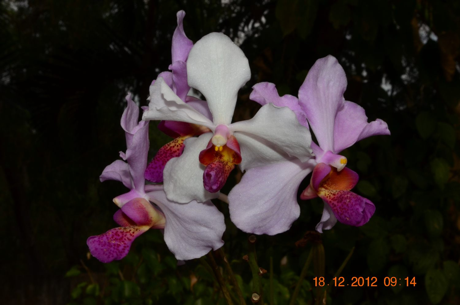 /wp-content/uploads/2020/10/Orchid%20CBG%20-6-.JPG