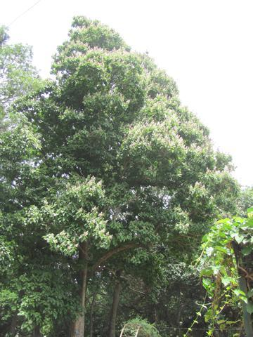 /wp-content/uploads/2020/10/Trincomalee%20Wood%20Tree%20-%20Canopy.jpg