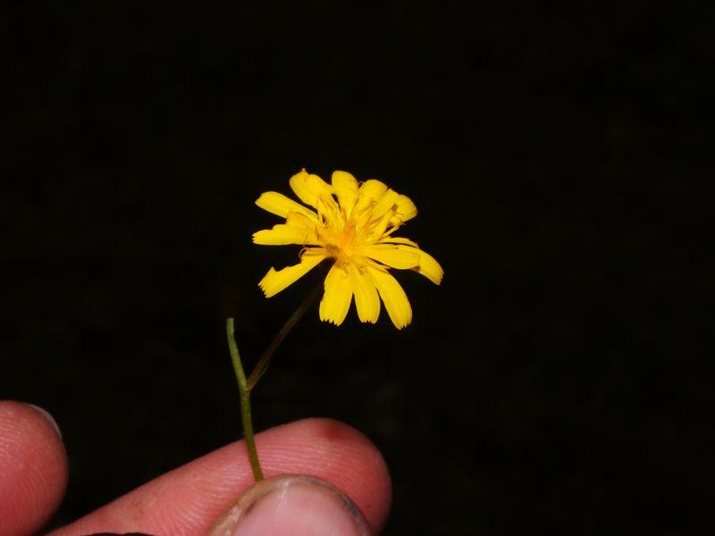 /wp-content/uploads/2020/10/Unid%20Asteraceae%20-4-.jpg