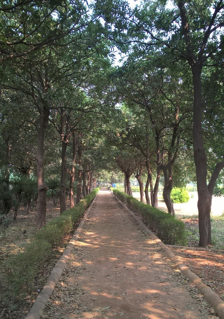 /wp-content/uploads/2020/10/Walkway_in_park_lined_with_trees.jpg