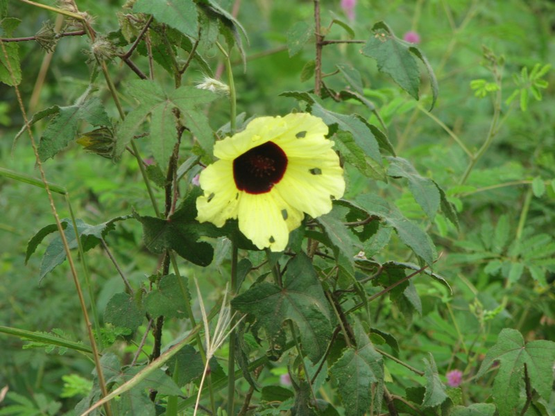 /wp-content/uploads/2020/10/Wild%20flowers-Vypeen%20Island%20-%20around-Kochi-Kerala%20002-A.jpg
