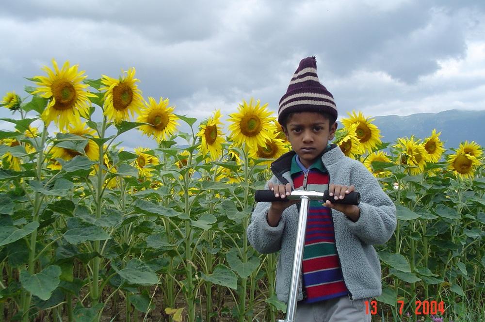 /wp-content/uploads/2020/10/sunflower%20meyrin1.JPG